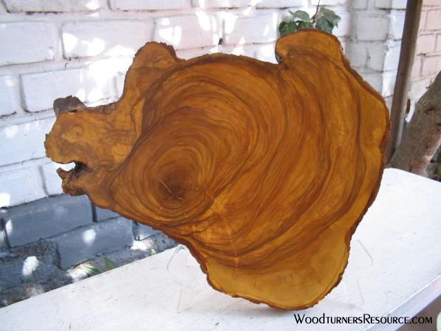 bear slab