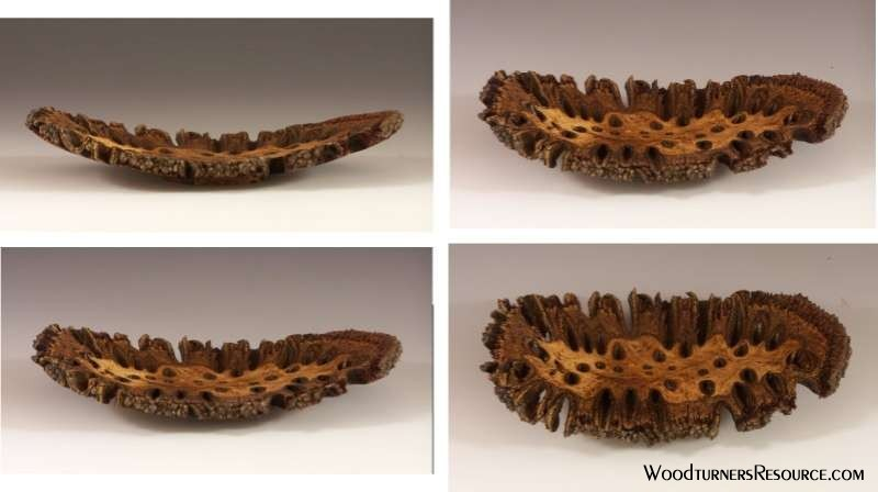 Banksia pod angel wing